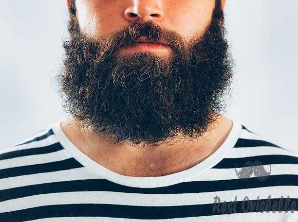 bearded man portrait - curly beard s and pictures What Is Wrong With A Curly Beard?