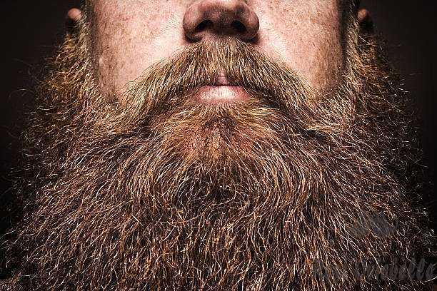 big bearded man portrait - beard s and pictures What is beard balm used for?